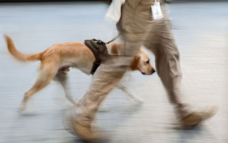 dog-detection-03-800×500